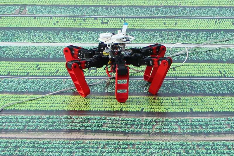 AntBot, a Robot that Moves without GPS