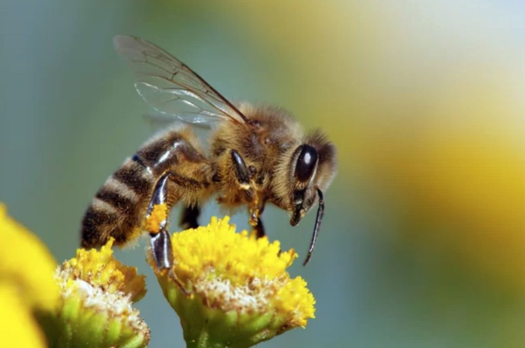 Bees can Do Basic Mathematics