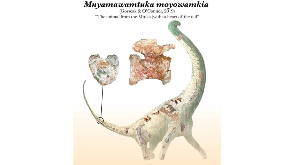 Mnyamawamtuka Moyowamkia provides New Clues about the Ecosystems of Africa