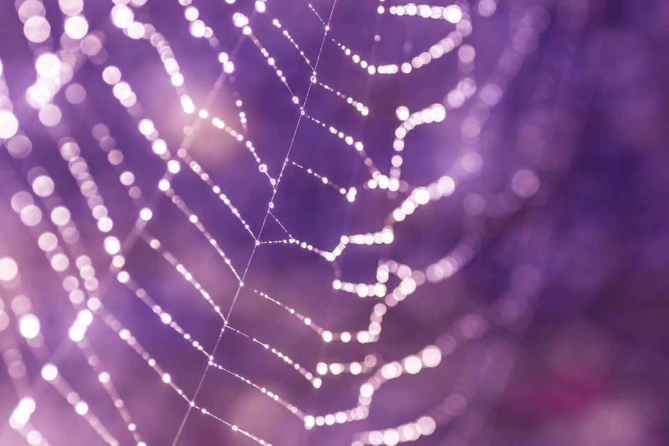 Bacteria can Manufacture High-Performance Proteins, like Spider Silk, for Space Missions
