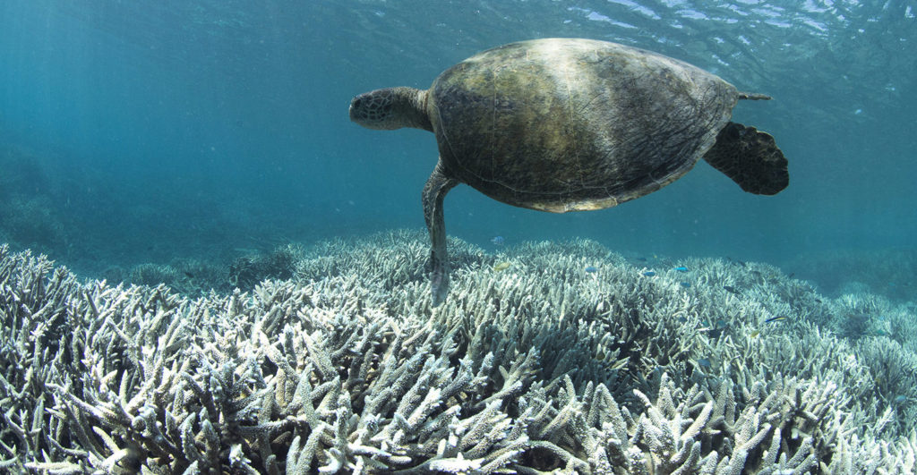 The Great Barrier Reef - amazing places