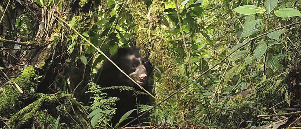 Daintree Rainforest is Facing a Massive Crisis