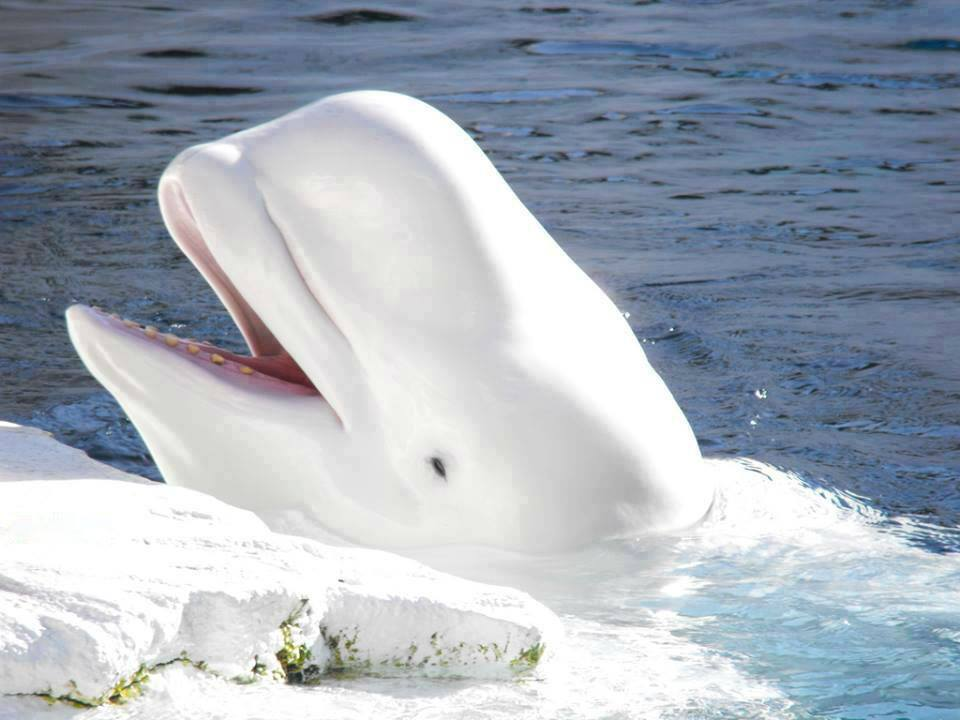 White Whale - Surreal Animals