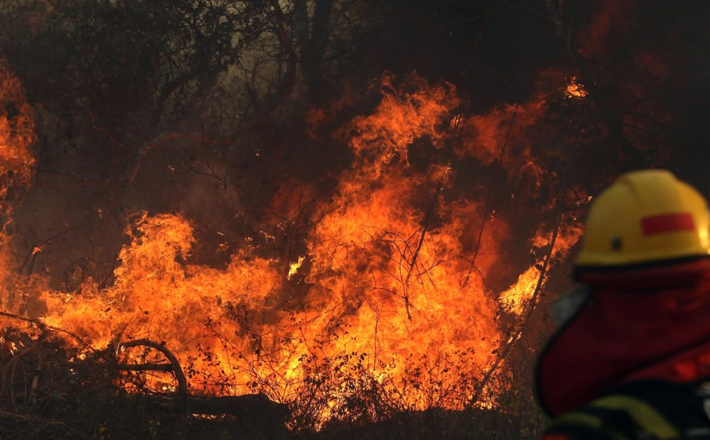The Possible Effects of Amazon Wildfires in the Future