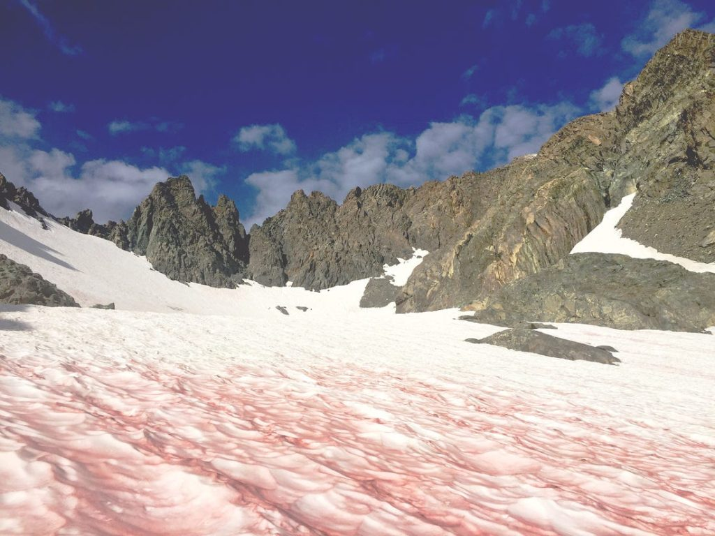 Blood-splattered Snow