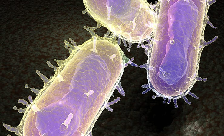 The Deadly Microbe